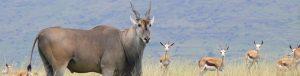 wild animals and story of moolmanshoek