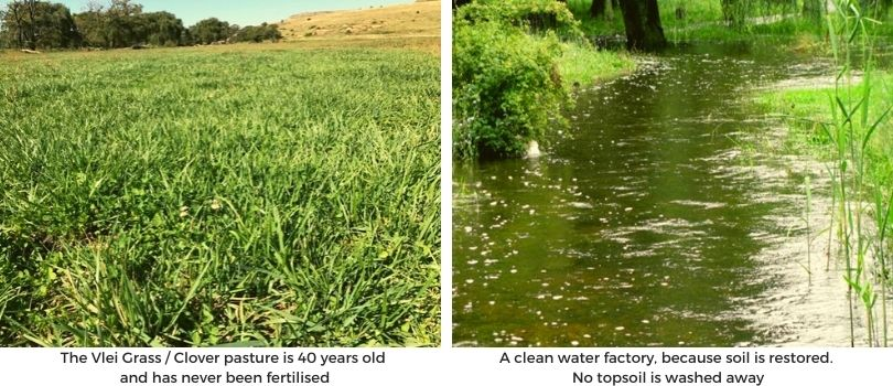 clean water factory moolmanshoek